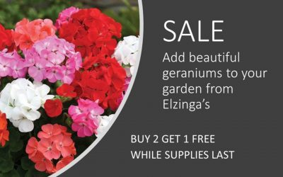 Flower Sale!